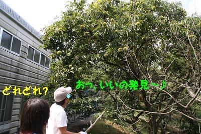 IMG_6654栗拾い2
