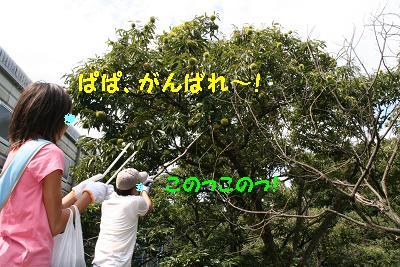 IMG_6658栗拾い5