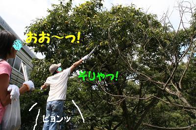 IMG_6655栗拾い6