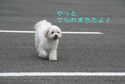 IMG_6864ふくろうラブ1