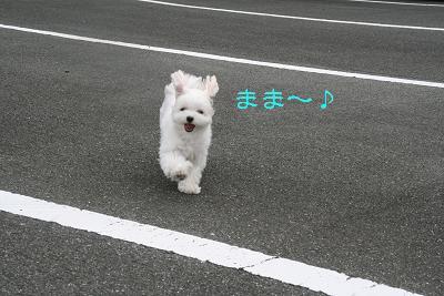 IMG_6863ふくろうラブ
