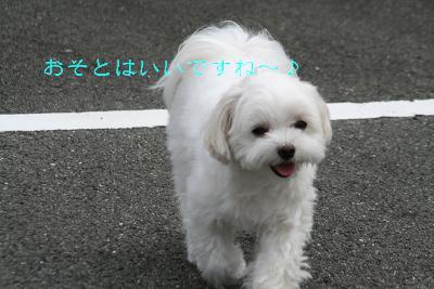 IMG_6872ふくろうラブ