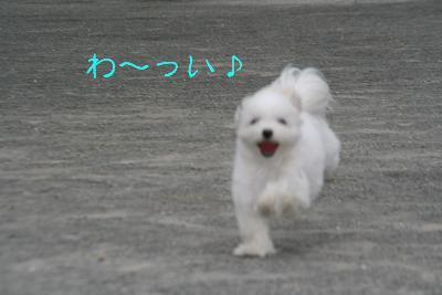 IMG_6905ふくろう城ラブ