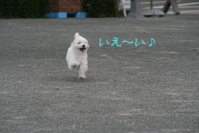 IMG_6913ふくろう城らぶ
