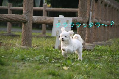 IMG_6961うさぎ1