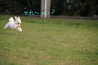 IMG_6985うさぎ4
