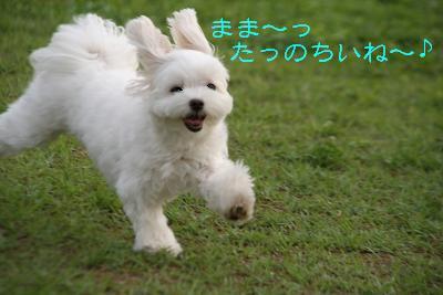IMG_6988うさぎ6