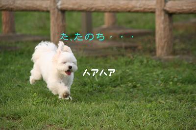 IMG_6981うさぎ7