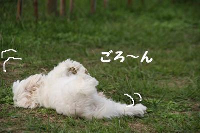 IMG_6998うさぎ10