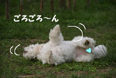 IMG_7003うさぎ11