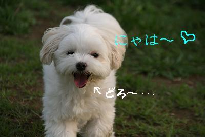 IMG_7012うさぎ14