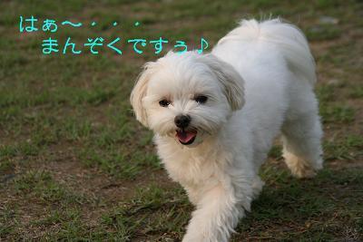 IMG_7014うさぎ15