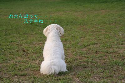 IMG_7015ウサギ15