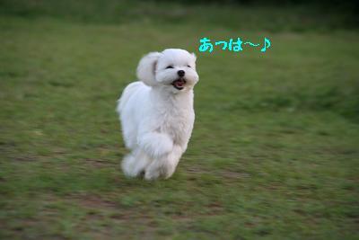 IMG_7164おひさ1