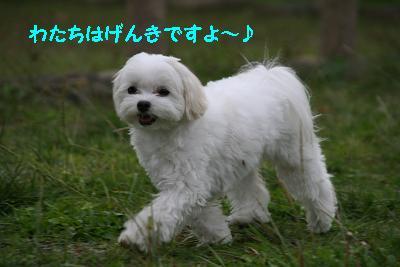 IMG_7220おわかれ2