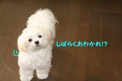 IMG_7274おわかれ1