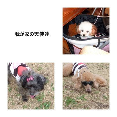 cats1_20090927215755.jpg