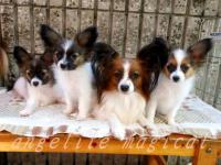 ママと三姉妹