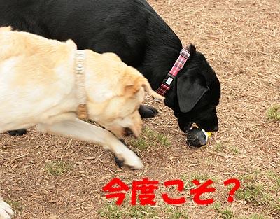 大間木0505-3