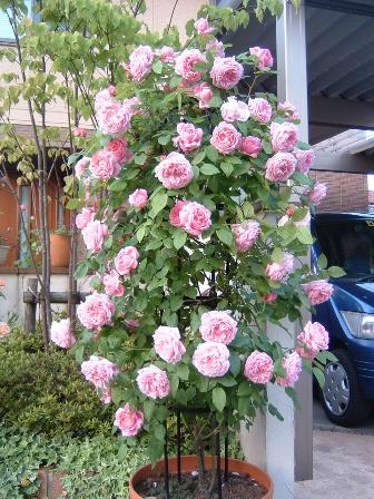 mary-rose08-2.jpg