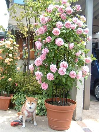 mary-rose08-3.jpg