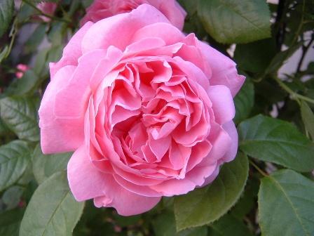 mary-rose08-4.jpg