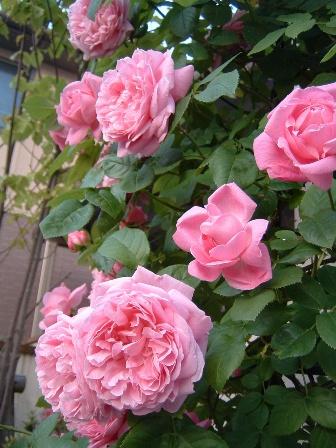 mary-rose08-5.jpg