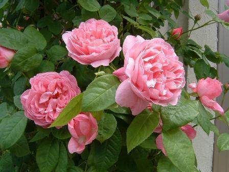 mary-rose08-6.jpg