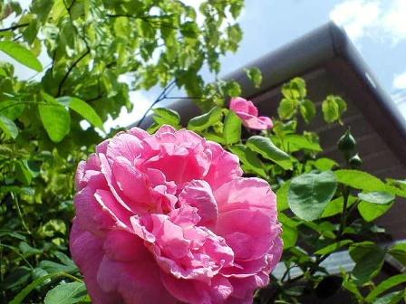 mary-rose08-8.jpg