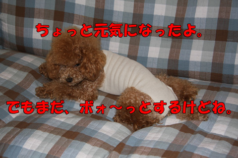 風邪M15