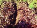 じゃが芋畝に落ち葉を撒いた
