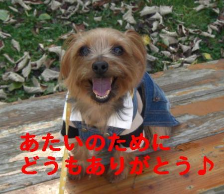 コピー ~ 2008.10.19~ 025