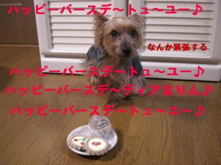 コピー ~ 2008.11.7~ 005