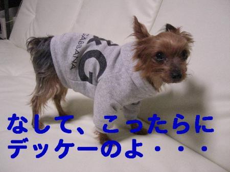 コピー ~ 2008.11.7~ 034