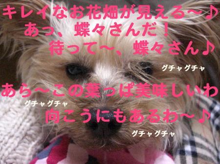 コピー ~ 2008.11.11~ 045