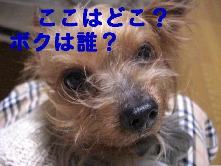 コピー ~ 2008.11.11~ 052