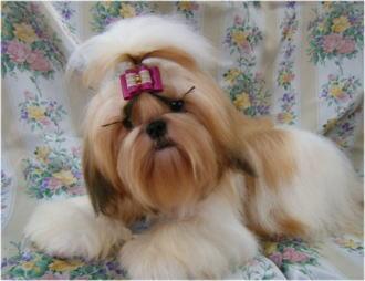 ヒミコの後胎犬つくしちゃん。