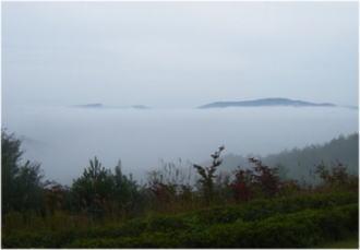 兵庫の雲海