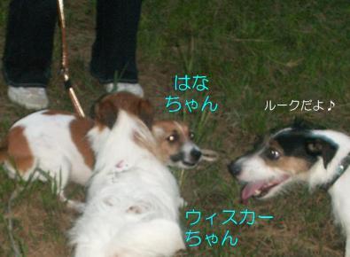 20080906009.jpg