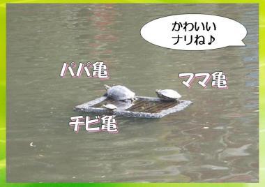 20090327008.jpg