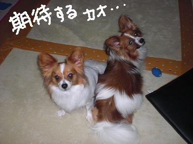 daifuu6.jpg