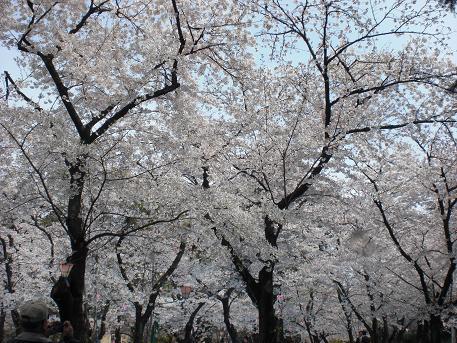 nagoyan.jpg