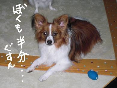 taifuu7.jpg