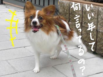 yakitori11.jpg