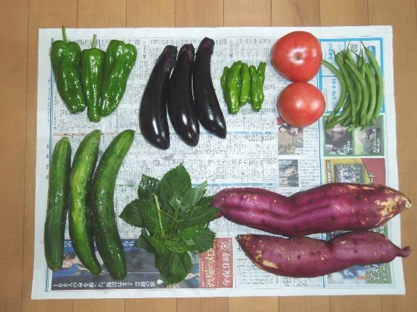 P9130004.JPG野菜.jpg