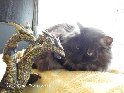 黒猫せぶとカイザーギドラ☆