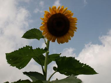 見つめる花