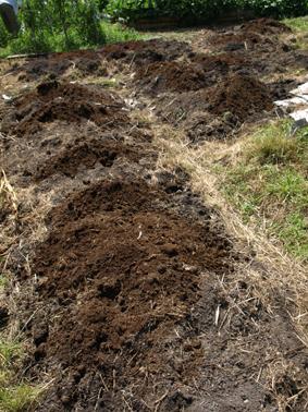 5堆肥をまく