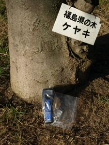 1福島県の木はケヤキ