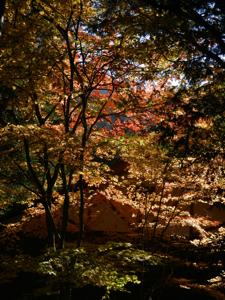 7乙女渓谷の紅葉